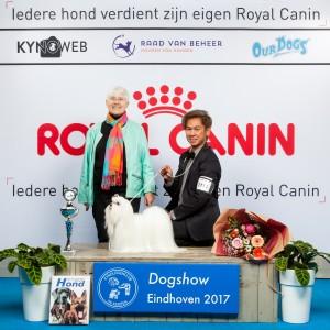 E BISmalteser EINDHOVEN 2017 Kynoweb Kynoweb-Ernst-von-Scheven 20170205 17 58 59